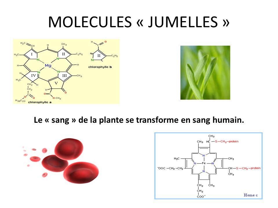 MOLECULES « JUMELLES » Le « sang » de la plante se transforme en sang humain.