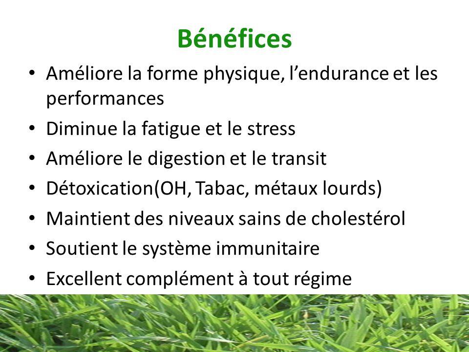 Bénéfices Améliore la forme physique, lendurance et les performances Diminue la fatigue et le stress Améliore le digestion et le transit Détoxication(
