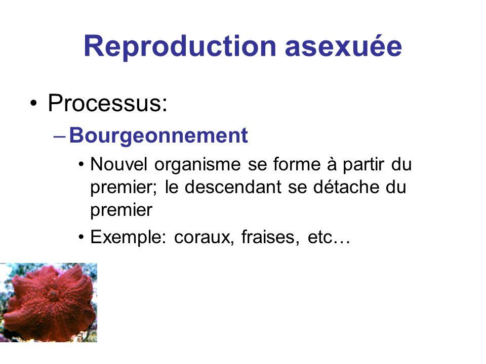Reproduction asexuée Processus: –Bourgeonnement Nouvel organisme se forme à partir du premier; le descendant se détache du premier Exemple: coraux, fr