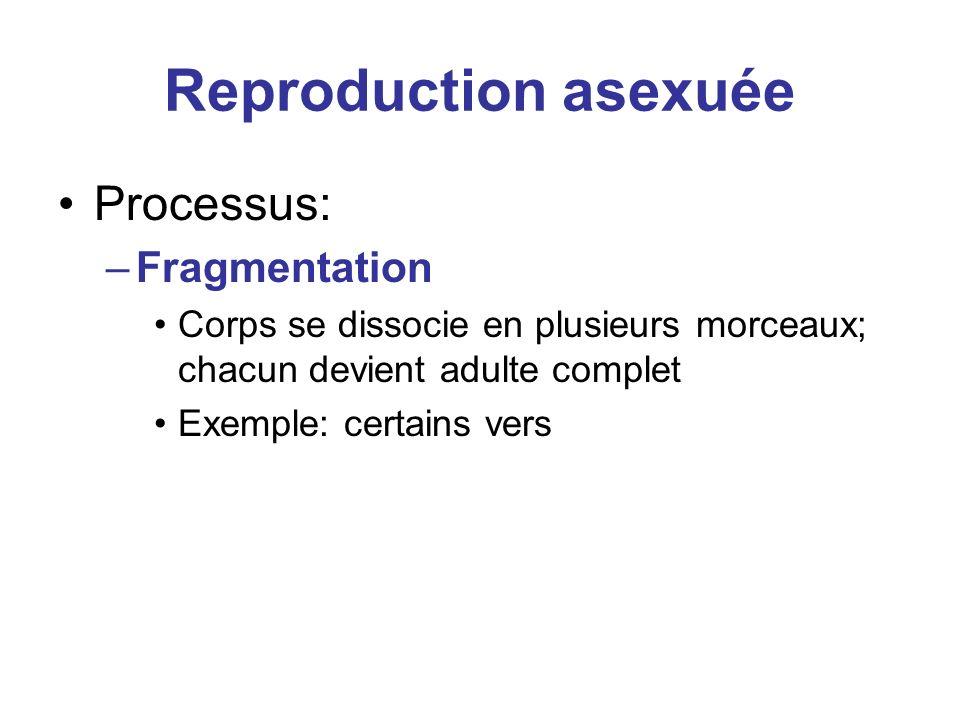 Reproduction asexuée Processus: –Fragmentation Corps se dissocie en plusieurs morceaux; chacun devient adulte complet Exemple: certains vers