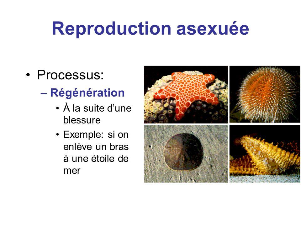 Reproduction asexuée Processus: –Régénération À la suite dune blessure Exemple: si on enlève un bras à une étoile de mer