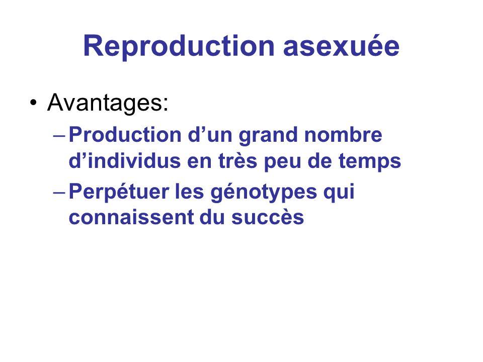 Reproduction asexuée Avantages: –Production dun grand nombre dindividus en très peu de temps –Perpétuer les génotypes qui connaissent du succès