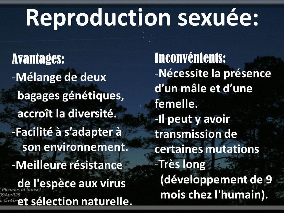 Reproduction sexuée: Avantages: -Mélange de deux bagages génétiques, accroît la diversité. -Facilité à sadapter à son environnement. -Meilleure résist