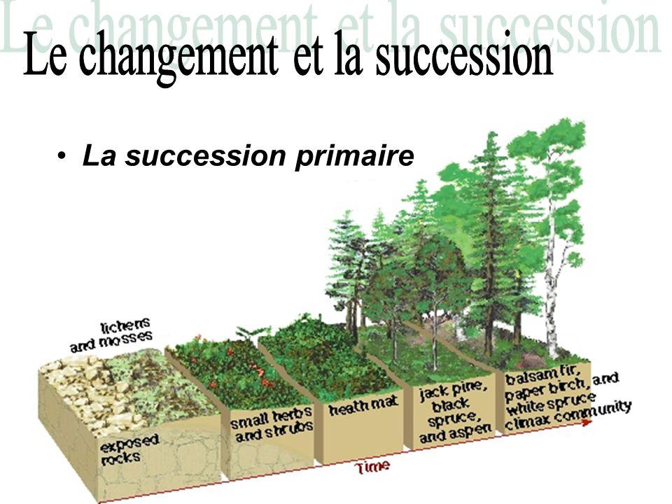 La succession primaire: –Au début, pas décosystème.