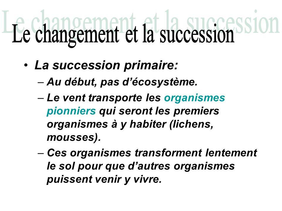 La succession primaire: –Au début, pas décosystème. –Le vent transporte les organismes pionniers qui seront les premiers organismes à y habiter (liche
