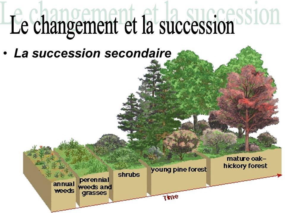 –Au début il y a déjà les restant dun écosystème (due a: feu, violente tempête, inondation, etc…) –Le nouvel écosystème se formera en utilisant les restes de lécosystème précédant.