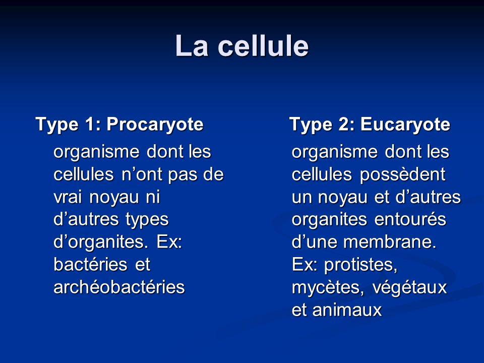 La cellule Type 1: Procaryote organisme dont les cellules nont pas de vrai noyau ni dautres types dorganites. Ex: bactéries et archéobactéries Type 2:
