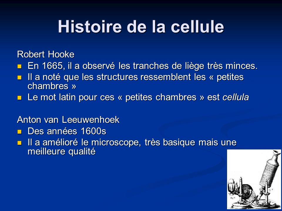 Histoire de la cellule Robert Hooke En 1665, il a observé les tranches de liège très minces. En 1665, il a observé les tranches de liège très minces.