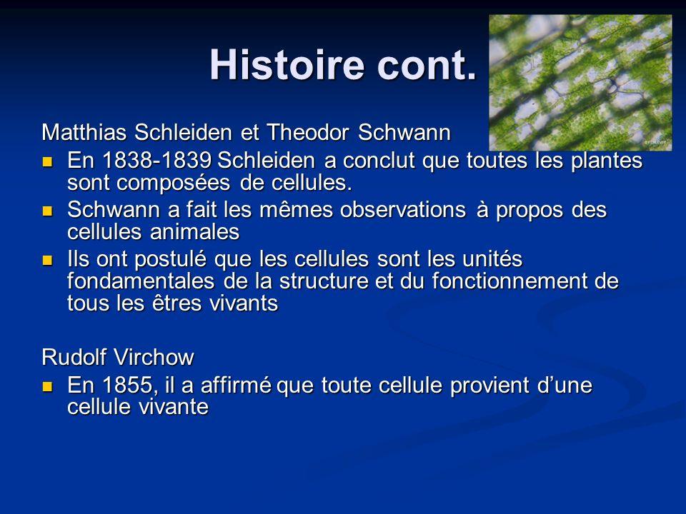 Histoire cont. Matthias Schleiden et Theodor Schwann En 1838-1839 Schleiden a conclut que toutes les plantes sont composées de cellules. En 1838-1839