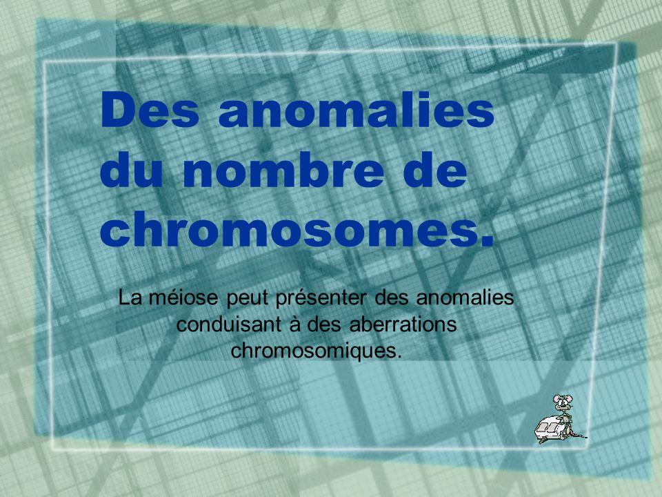 Des anomalies du nombre de chromosomes. La méiose peut présenter des anomalies conduisant à des aberrations chromosomiques.