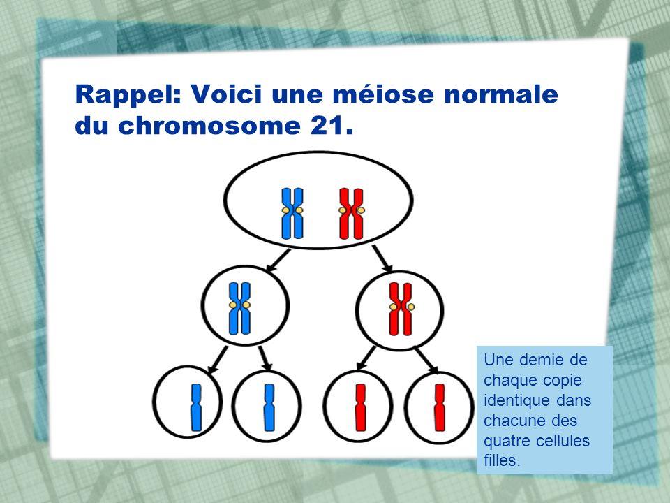 Rappel: Voici une méiose normale du chromosome 21. Une demie de chaque copie identique dans chacune des quatre cellules filles.