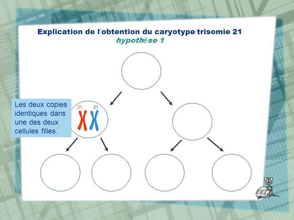 Explication de l obtention du caryotype trisomie 21 hypoth è se 1 21 Les deux copies identiques dans une des deux cellules filles.