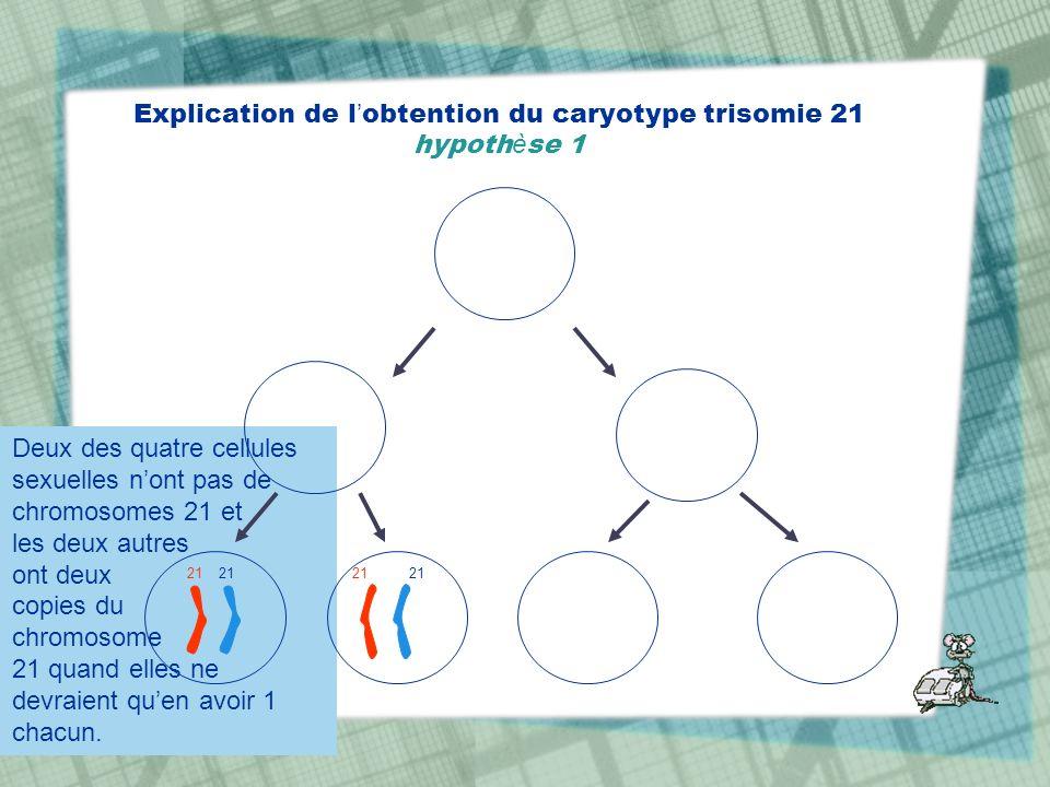 Deux des quatre cellules sexuelles nont pas de chromosomes 21 et les deux autres ont deux copies du chromosome 21 quand elles ne devraient quen avoir