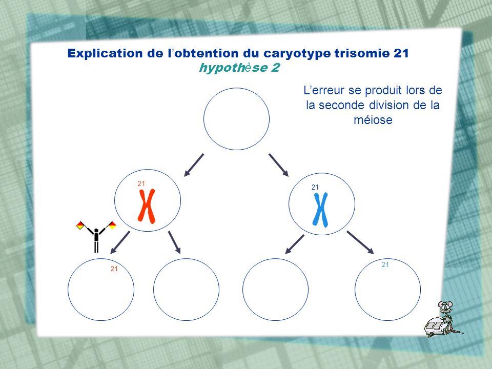 Explication de l obtention du caryotype trisomie 21 hypoth è se 2 21 Lerreur se produit lors de la seconde division de la méiose