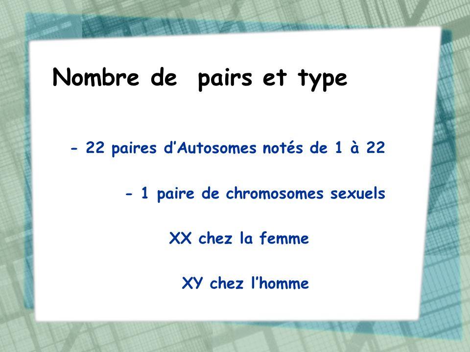 Rôle des chromosomes Deux rôles principaux : - transmission du patrimoine génétique (ensemble des informations génétiques) - expression des gènes (ensemble de tes traits physiques visibles)