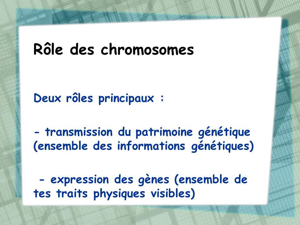 Rôle des chromosomes Deux rôles principaux : - transmission du patrimoine génétique (ensemble des informations génétiques) - expression des gènes (ens