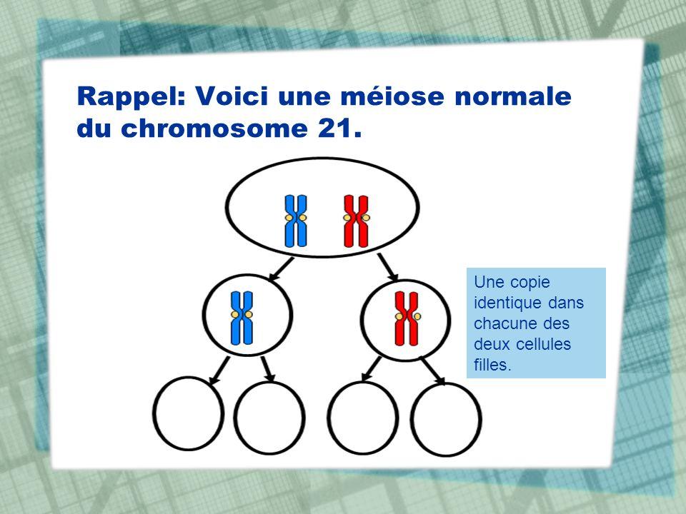 Rappel: Voici une méiose normale du chromosome 21.