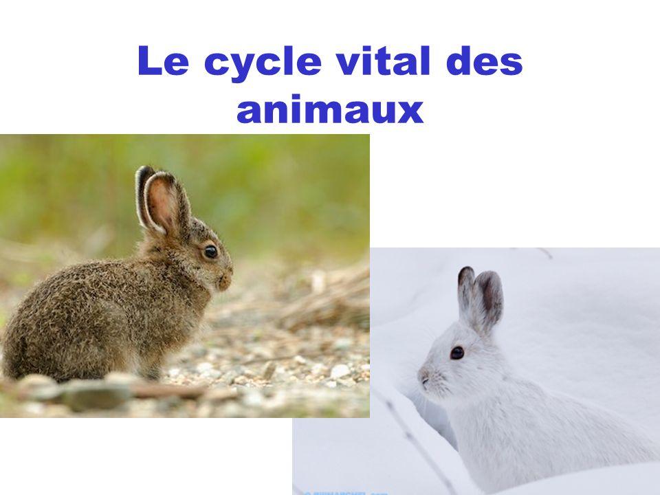 Le cycle vital des animaux