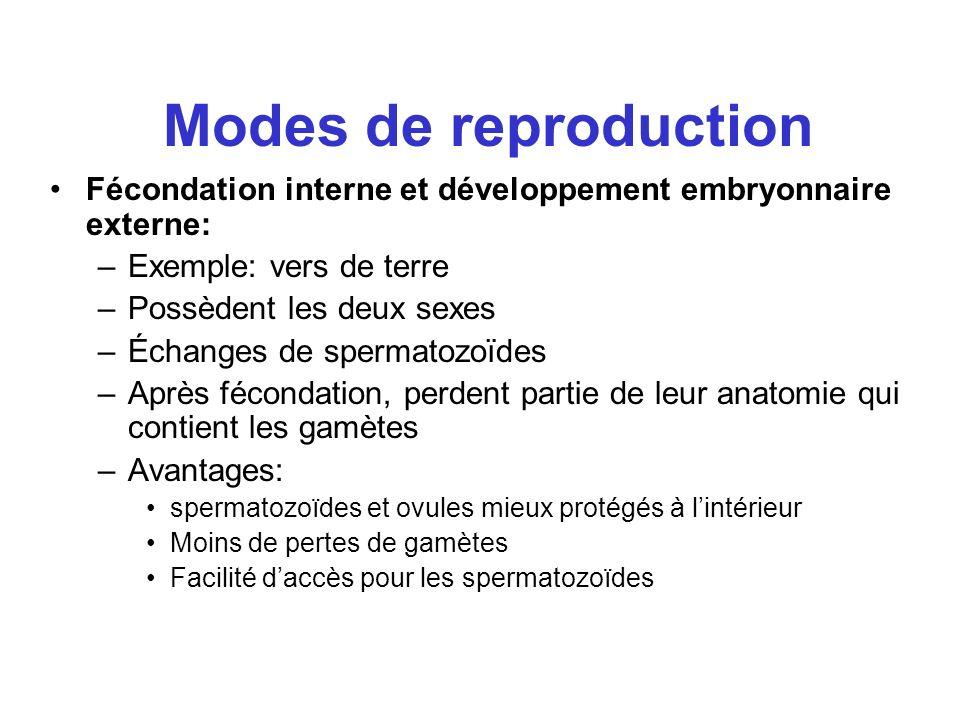 Modes de reproduction Fécondation interne et développement embryonnaire externe: –Exemple: vers de terre –Possèdent les deux sexes –Échanges de sperma