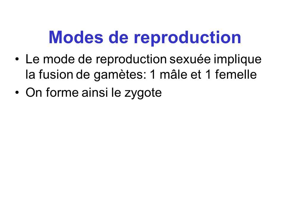 Modes de reproduction Le mode de reproduction sexuée implique la fusion de gamètes: 1 mâle et 1 femelle On forme ainsi le zygote