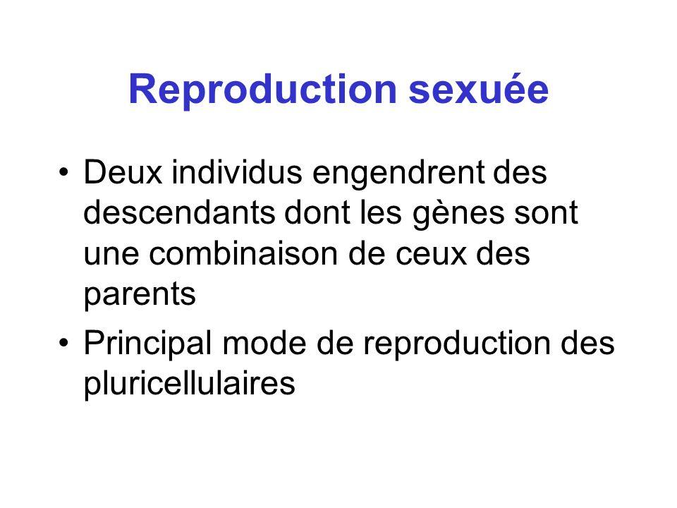 Reproduction sexuée Deux individus engendrent des descendants dont les gènes sont une combinaison de ceux des parents Principal mode de reproduction d