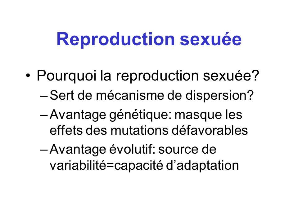 Reproduction sexuée Pourquoi la reproduction sexuée? –Sert de mécanisme de dispersion? –Avantage génétique: masque les effets des mutations défavorabl