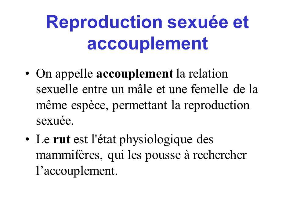 On appelle accouplement la relation sexuelle entre un mâle et une femelle de la même espèce, permettant la reproduction sexuée. Le rut est l'état phys