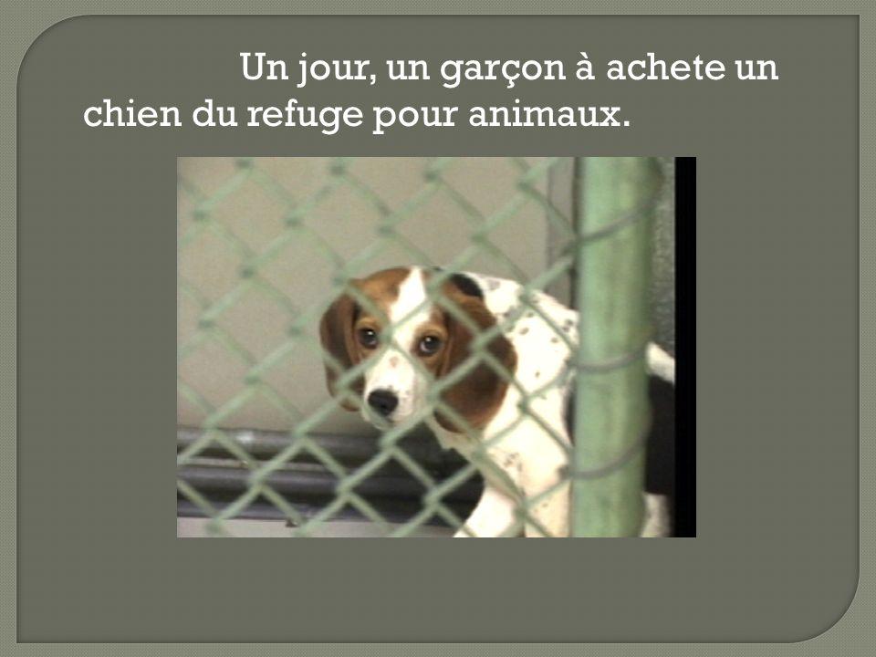 Un jour, un garçon à achete un chien du refuge pour animaux.