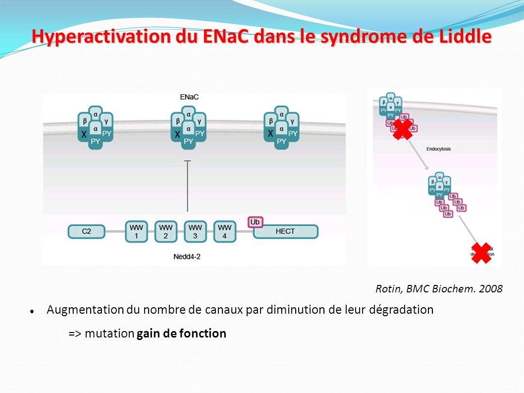 Ovocyte de Xénope ADNc Activité globale de ENaC = courant sodique sans amiloride – courant sodique avec amiloride Ɣ α β amiloride Ac anti-FLAG Conséquences des mutations retrouvées dans le syndrome de Liddle sur lactivité du ENaC L activité de EnaC est corrélée au nombre de sous unités de EnaC à la surface cellulaire β R564 stop Ɣ α β Hyperactivation de ENaC = augmentation du nombre de canaux à la surface des cellules + augmentation de la probabilité d ouverture du canal Firsov et al., Proc Nat Acad Sci USA,1996.