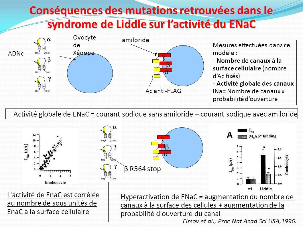 L hyperactivation du ENaC aboutit au pseudohyperaldostéronisme Capillaire péri- tubulaire Tube collecteur Expansion volémique, HTA hypokaliémie SRAA Rénine et aldostérone basses Na K