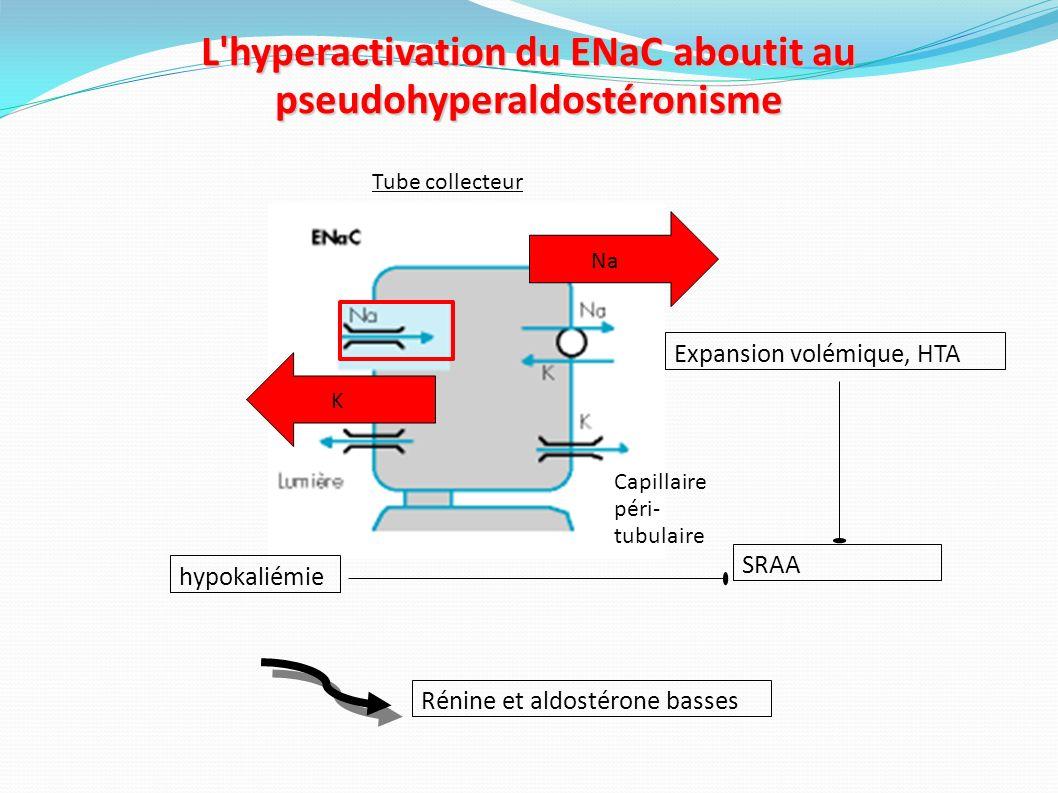 Traitement du syndrome de Liddle Régime hyposodé Inhibiteurs du ENaC : Amiloride à doses faibles (10 à 30 mg/j) : Jeunemaître et al., J Hypertens., 1997.