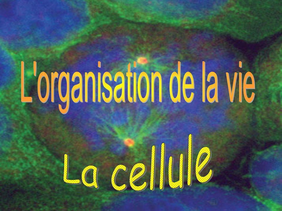 Lorganisation de la vie La cellule