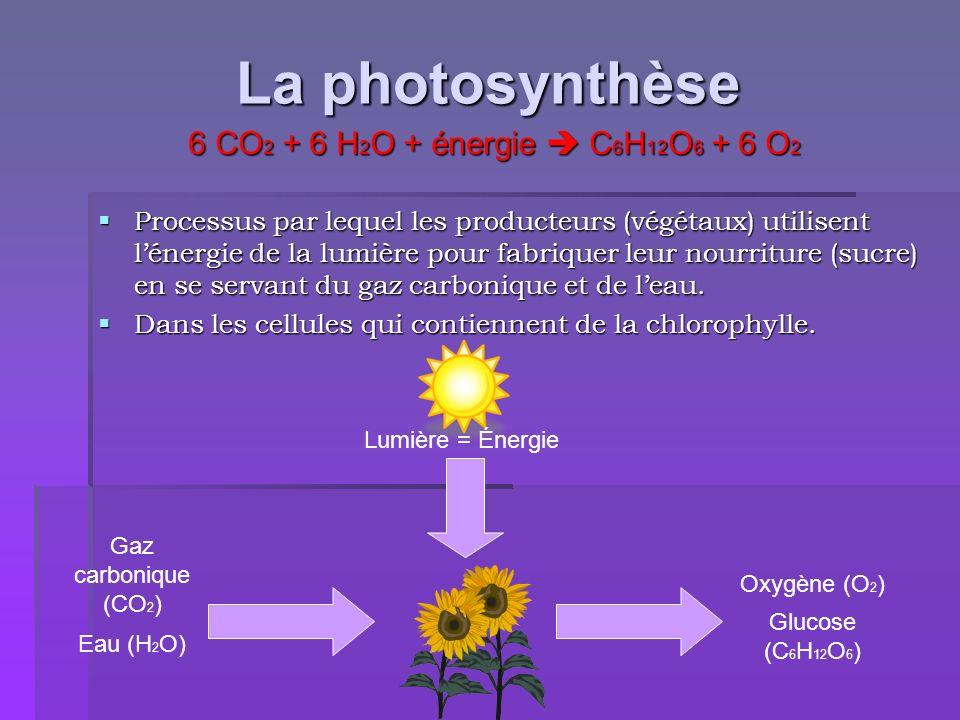 La photosynthèse Processus par lequel les producteurs (végétaux) utilisent lénergie de la lumière pour fabriquer leur nourriture (sucre) en se servant
