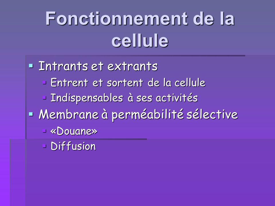 Comment les cellules obtiennent- elles leur énergie .