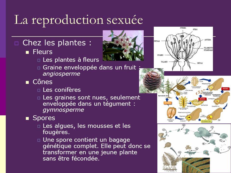 La reproduction sexuée Chez les plantes : Fleurs Les plantes à fleurs Graine enveloppée dans un fruit : angiosperme Cônes Les conifères Les graines so
