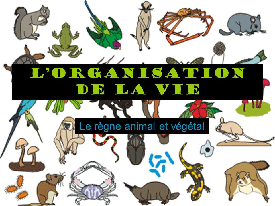 LUnivers vivant Lorganisation de la vie Le règne animal et végétal