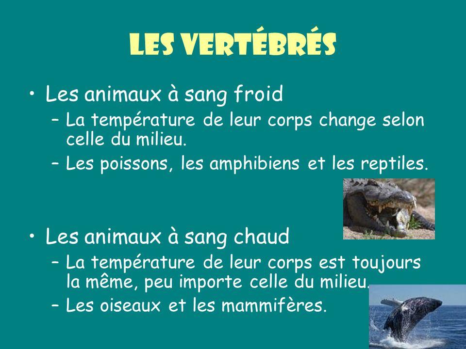 Les vertébrés Les animaux à sang froid –La température de leur corps change selon celle du milieu. –Les poissons, les amphibiens et les reptiles. Les