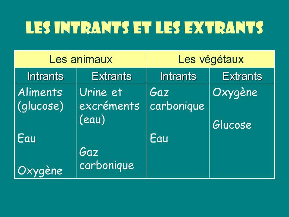 Les intrants et les extrants Les animauxLes végétaux IntrantsExtrantsIntrantsExtrants Aliments (glucose) Eau Oxygène Urine et excréments (eau) Gaz car