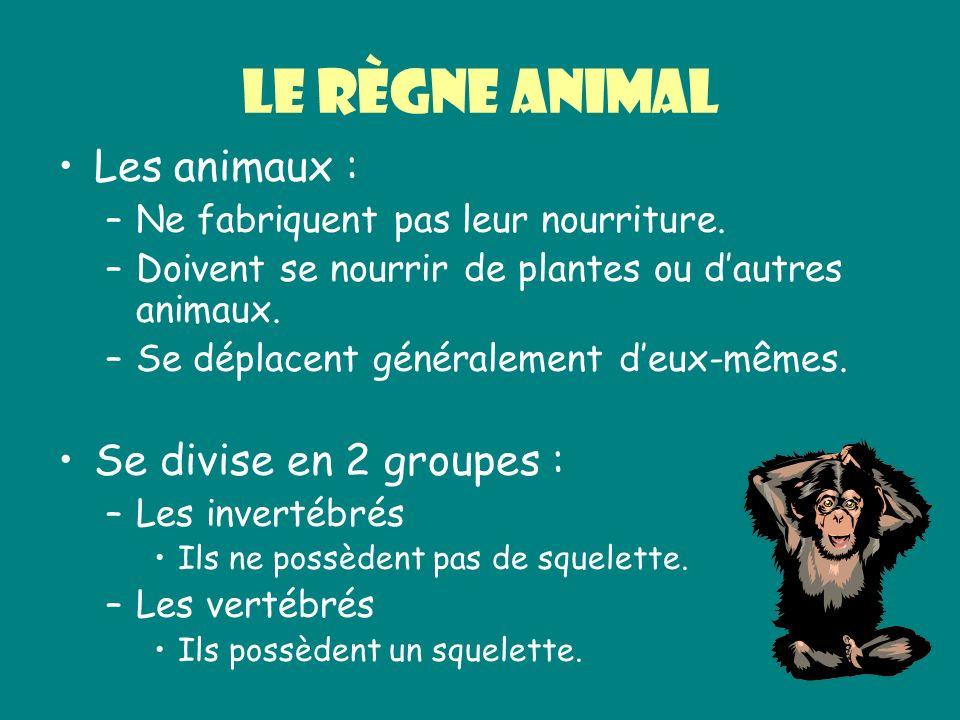 Le règne animal Les animaux : –Ne fabriquent pas leur nourriture. –Doivent se nourrir de plantes ou dautres animaux. –Se déplacent généralement deux-m