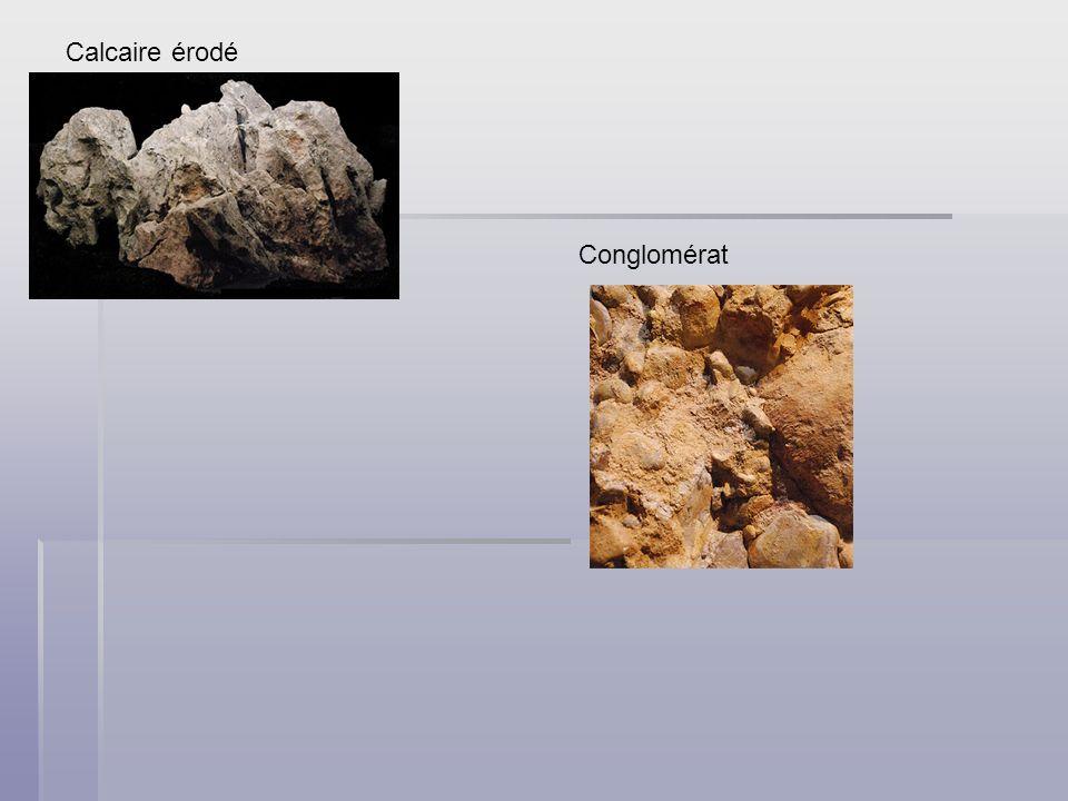 Les fossiles Les fossiles sont les traces des êtres vivants disparus.