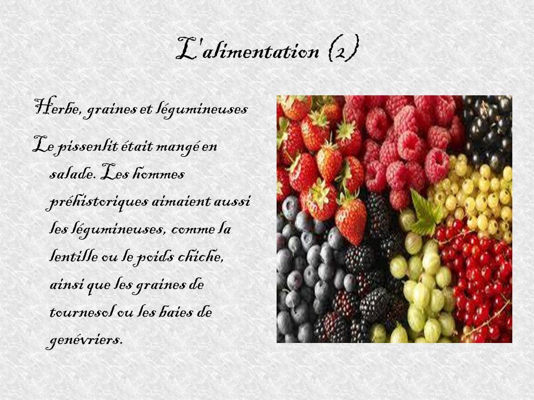 L'alimentation (2) Herbe, graines et légumineuses Le pissenlit était mangé en salade. Les hommes préhistoriques aimaient aussi les légumineuses, comme