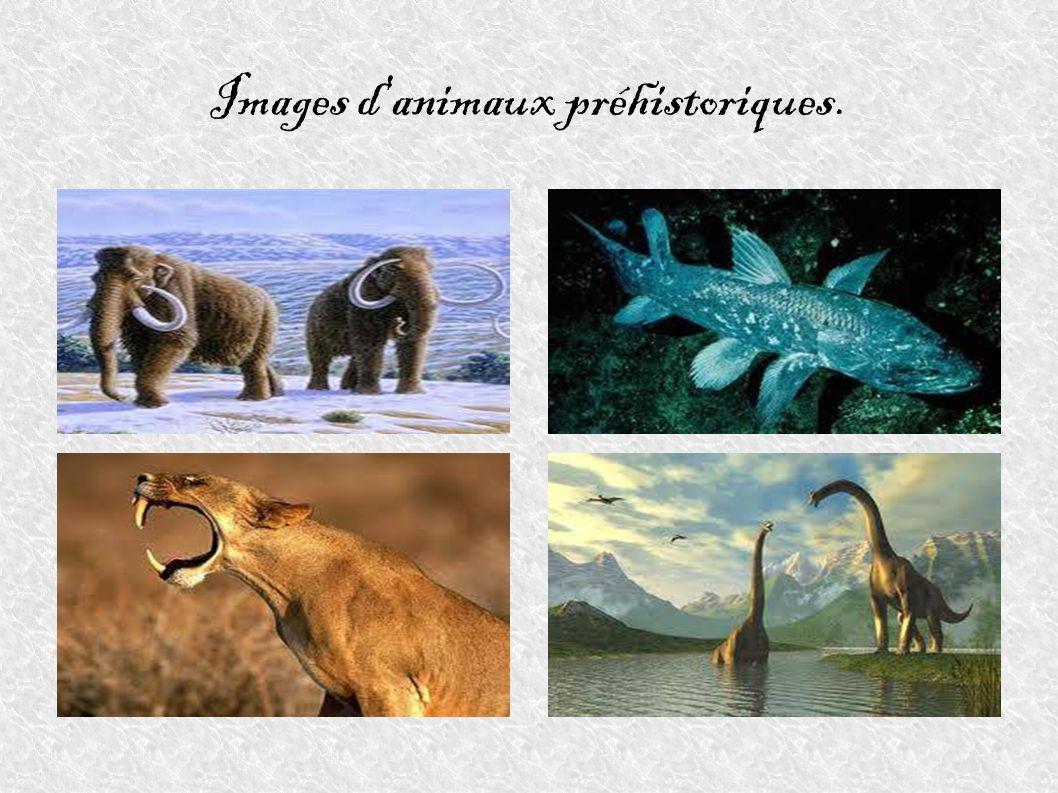 Images d'animaux préhistoriques.