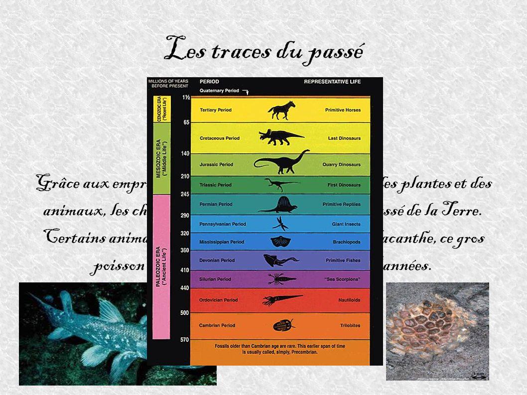 Les premiers pas sur Terre L ichtyostège a été le premier être vivant à marcher sur la Terre.