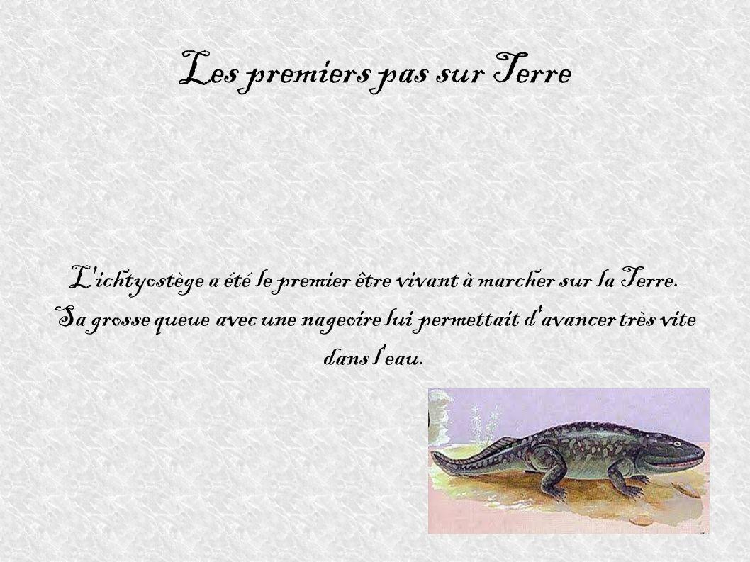 Les premiers pas sur Terre L'ichtyostège a été le premier être vivant à marcher sur la Terre. Sa grosse queue avec une nageoire lui permettait d'avanc
