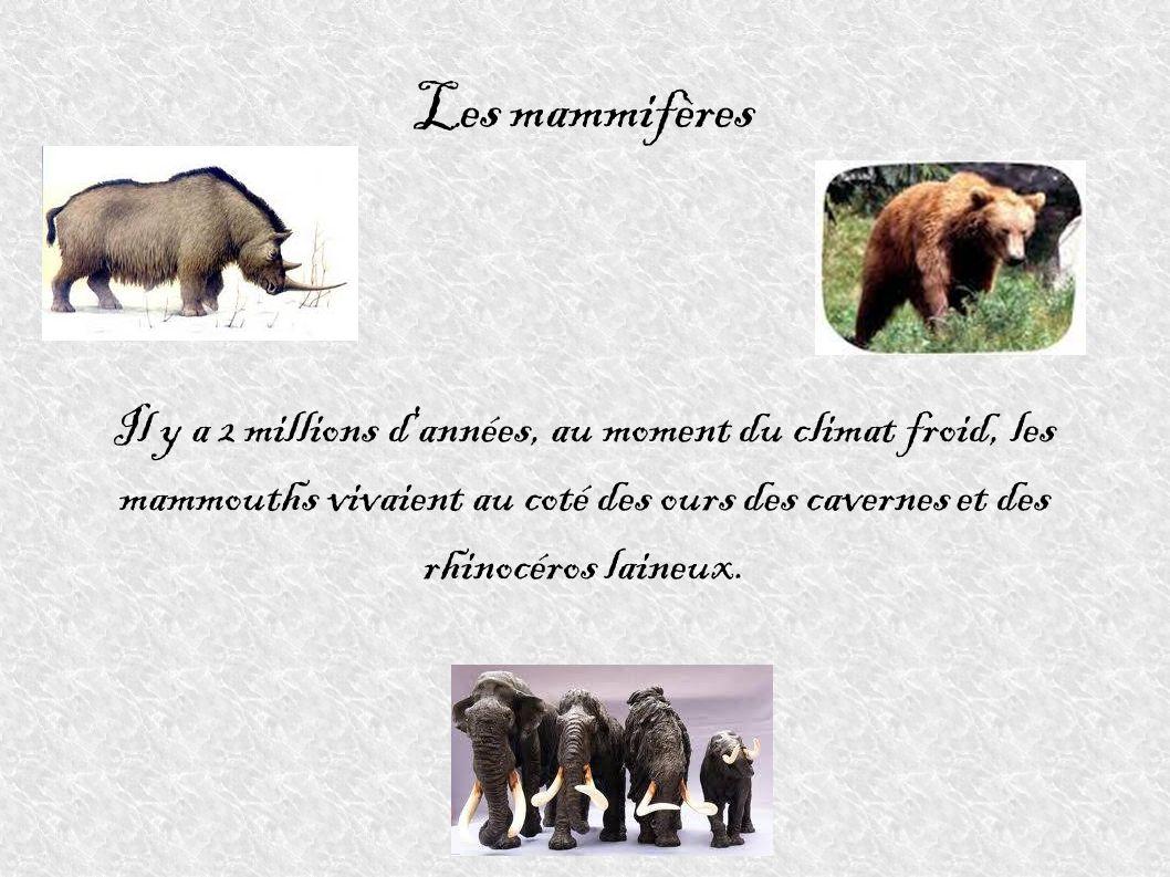 Les mammifères Il y a 2 millions d'années, au moment du climat froid, les mammouths vivaient au coté des ours des cavernes et des rhinocéros laineux.