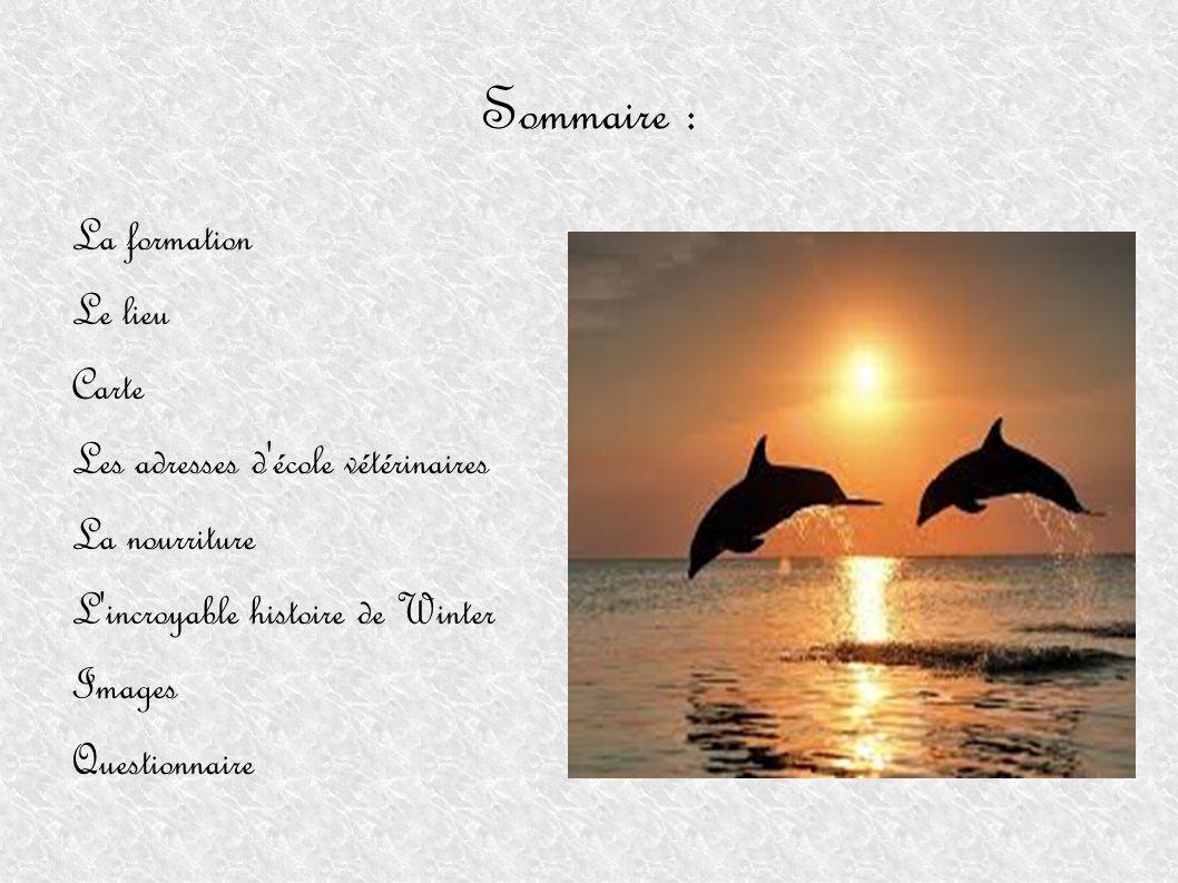 La formation Pour devenir dompteuse de dauphins, il faut réaliser des études de vétérinaire.