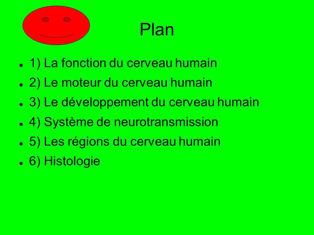 Plan 1) La fonction du cerveau humain 2) Le moteur du cerveau humain 3) Le développement du cerveau humain 4) Système de neurotransmission 5) Les régions du cerveau humain 6) Histologie