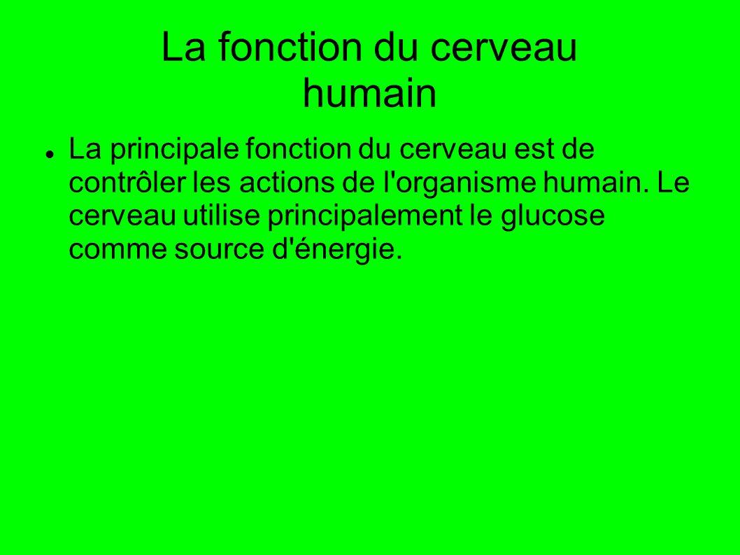 La fonction du cerveau humain La principale fonction du cerveau est de contrôler les actions de l'organisme humain. Le cerveau utilise principalement