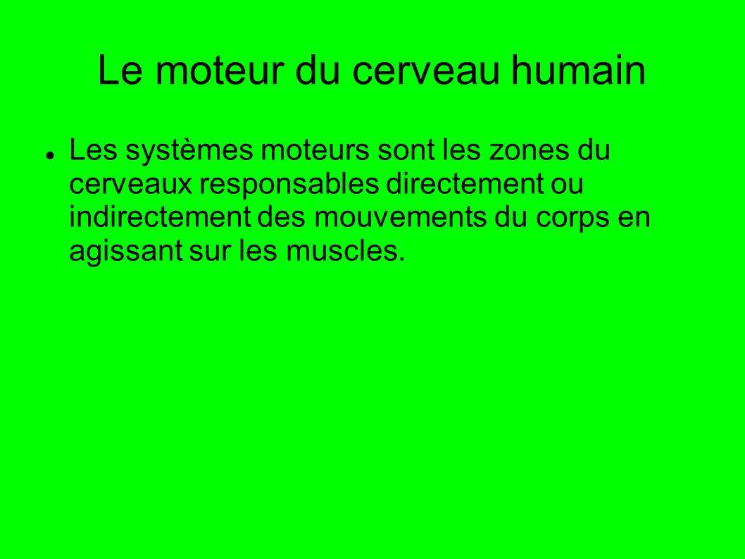 Le moteur du cerveau humain Les systèmes moteurs sont les zones du cerveaux responsables directement ou indirectement des mouvements du corps en agiss