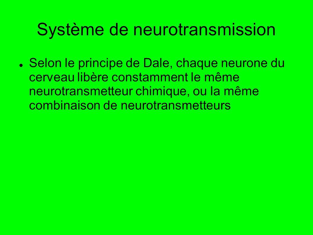 Système de neurotransmission Selon le principe de Dale, chaque neurone du cerveau libère constamment le même neurotransmetteur chimique, ou la même combinaison de neurotransmetteurs